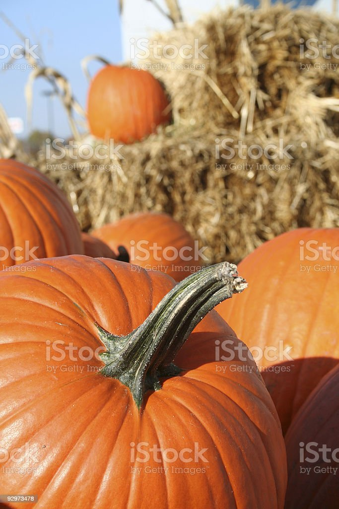 Pumpkins in the straw royalty-free stock photo