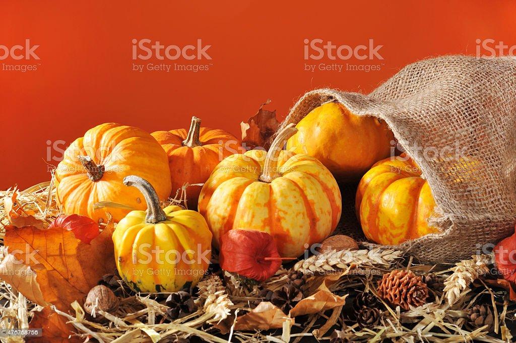 pumpkins jute bag stock photo