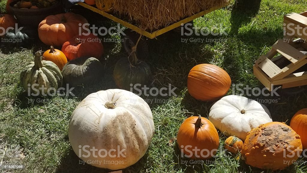 Pumpkins of all shapes and colors stock photo