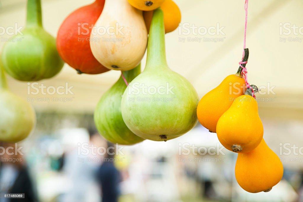 pumpkins of different sort stock photo