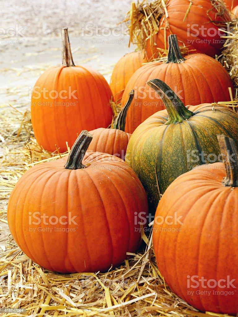Pumpkins on a straw stock photo