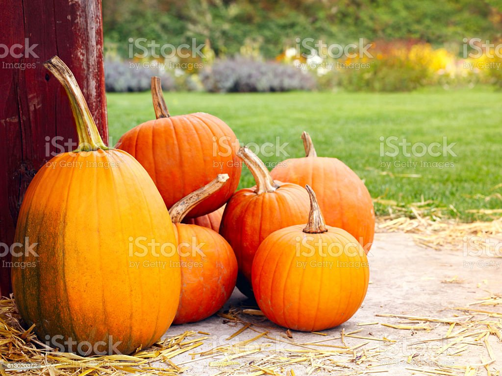 Pumpkins on a straw stock photo