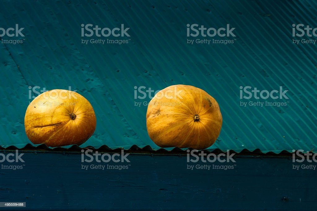 Pumpkins on a tine roof stock photo