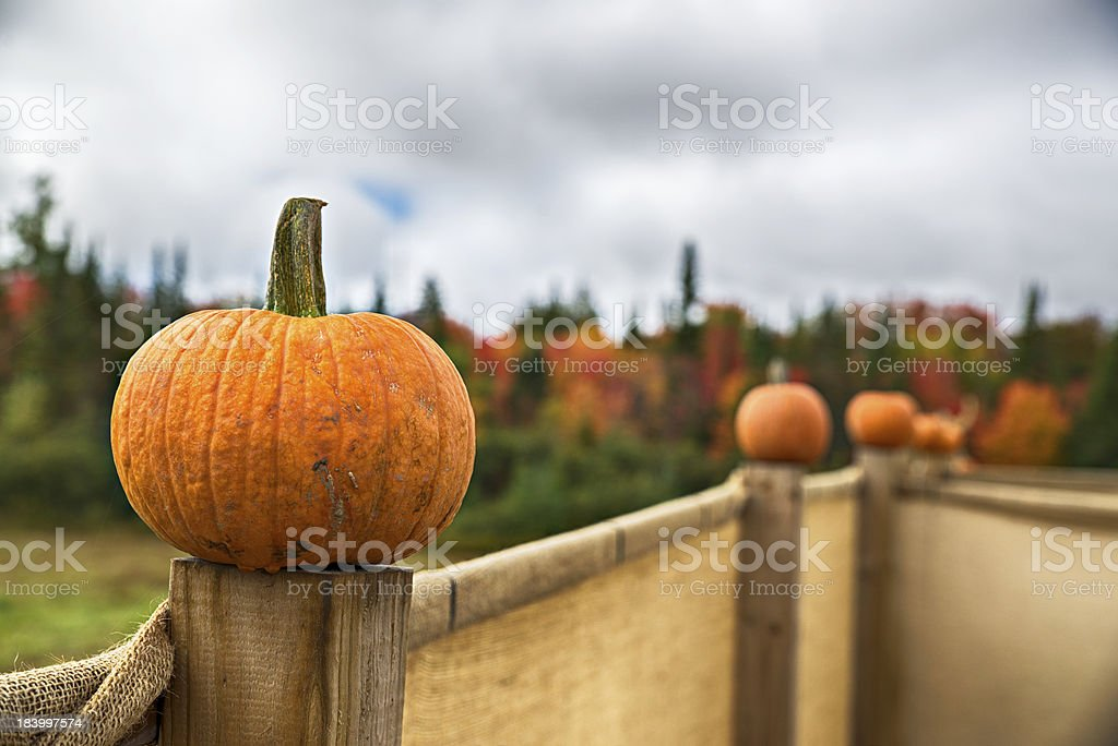 Pumpkins on Fence posts close up royalty-free stock photo