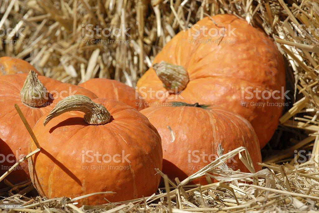Pumpkins on Straw royalty-free stock photo