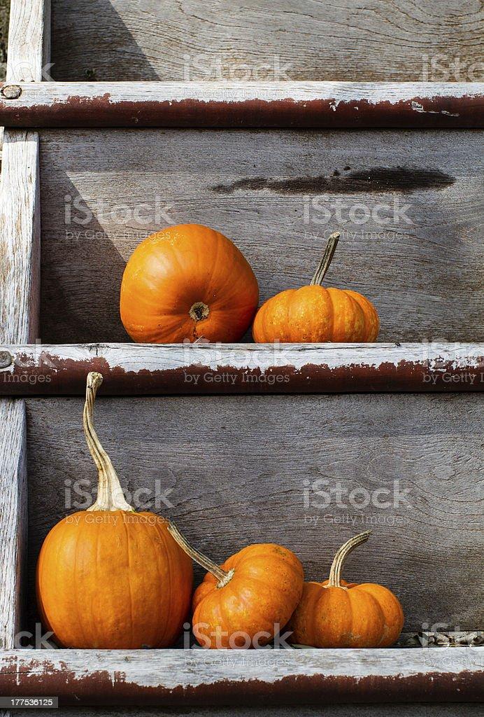 Pumpkins on worn shelves royalty-free stock photo