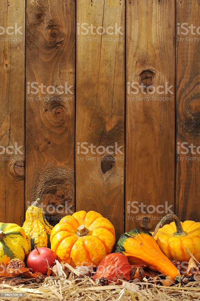 pumpkins stock photo