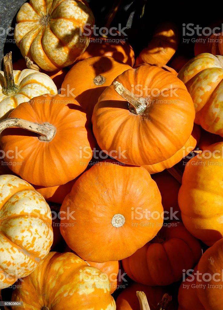 Pumpkins royalty-free stock photo