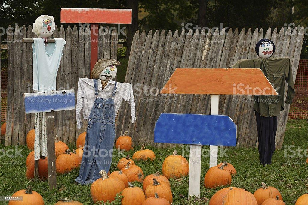 Pumpkins Signs royalty-free stock photo