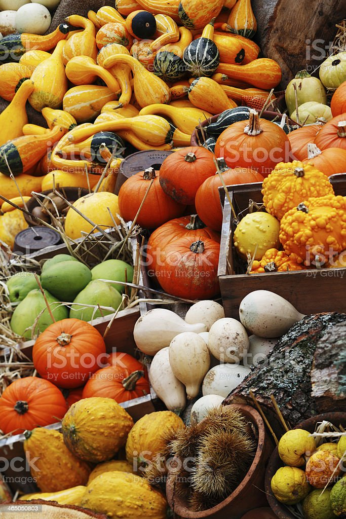 Pumpkins, summer and winter squashes stock photo