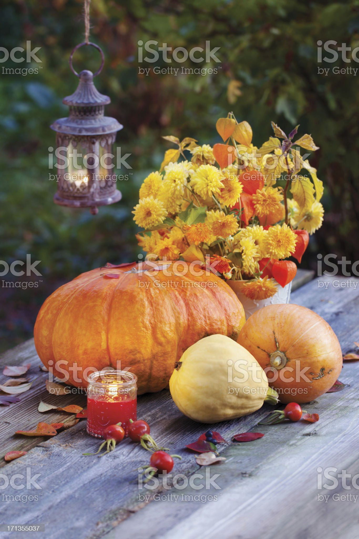 Pumpkins with autumn flowers in the evening royalty-free stock photo