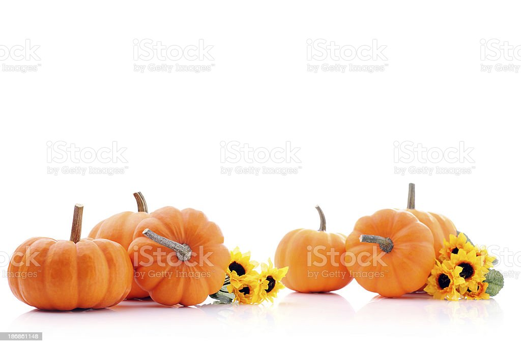 Pumpkins with copy space on white stock photo
