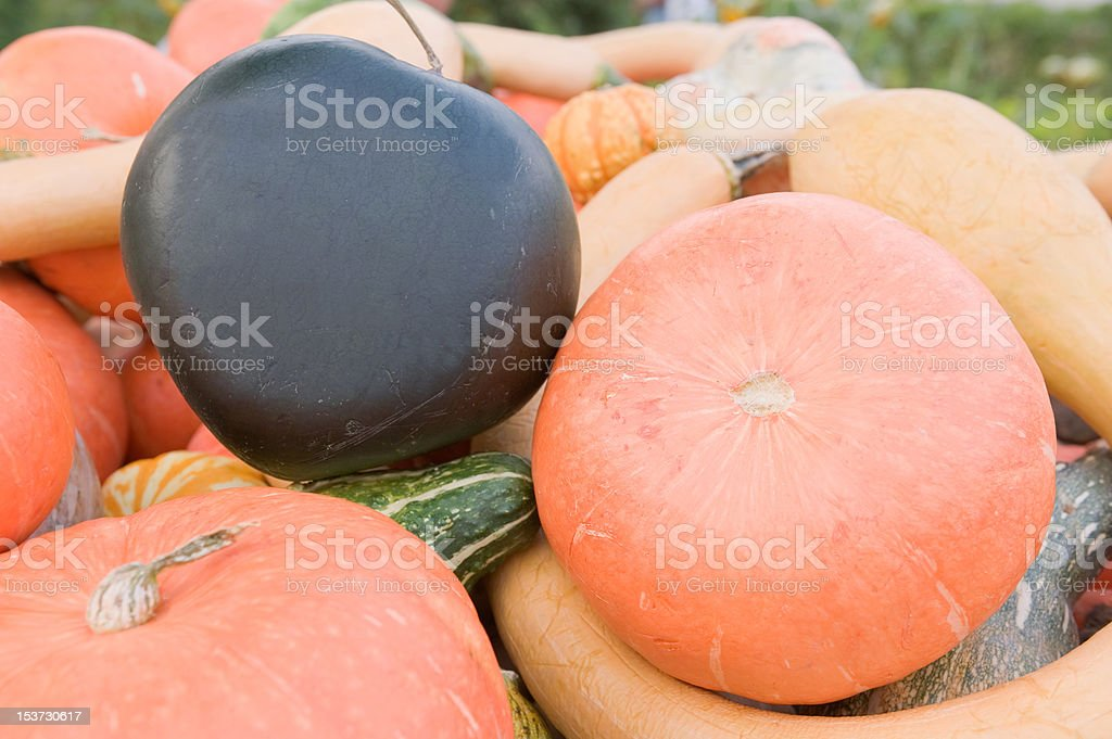 Pumpkins,squash and gourd harvest royalty-free stock photo