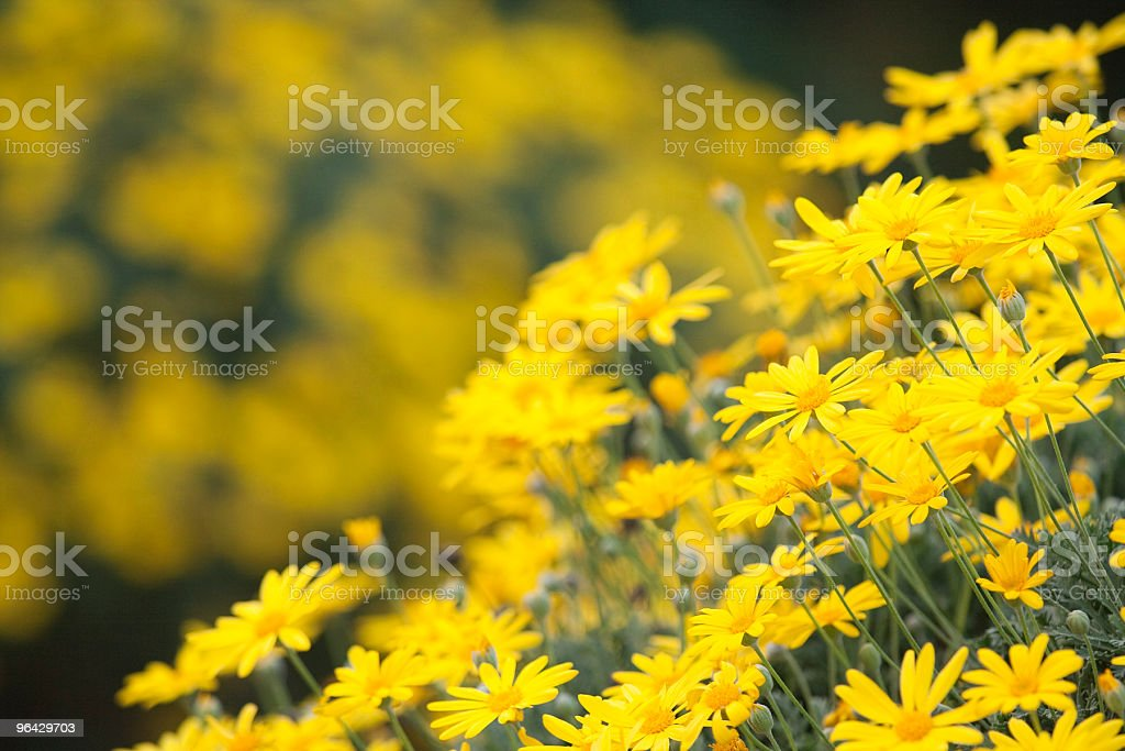 punchy yellow stock photo