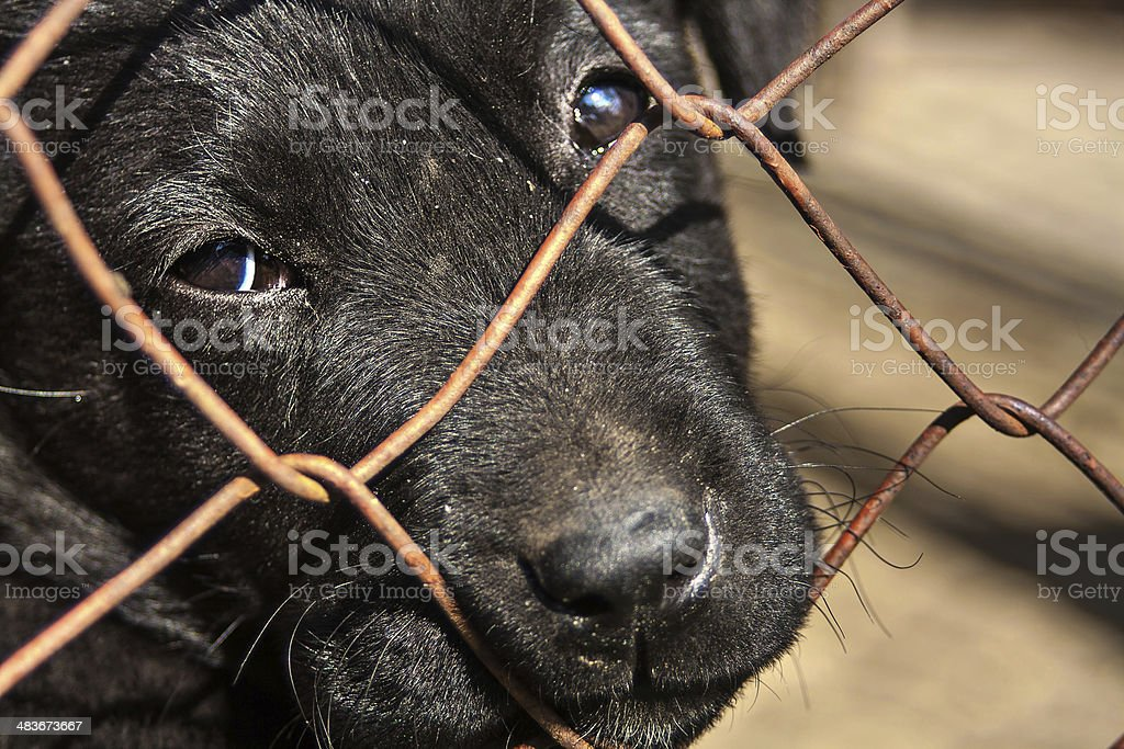Pund puppy for adoption stock photo