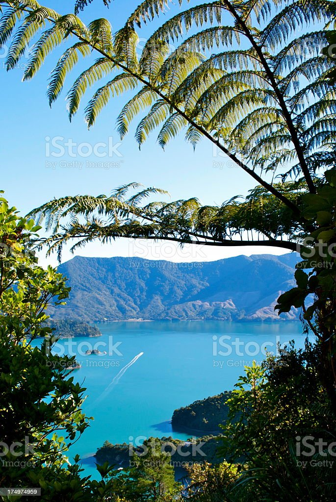 Punga & Kenepuru Sound, Marlborough, NZ royalty-free stock photo