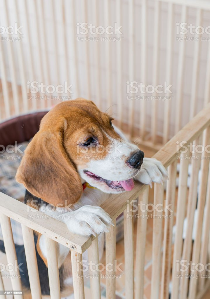 Punish naughty puppy By imprisoned in a cage stock photo