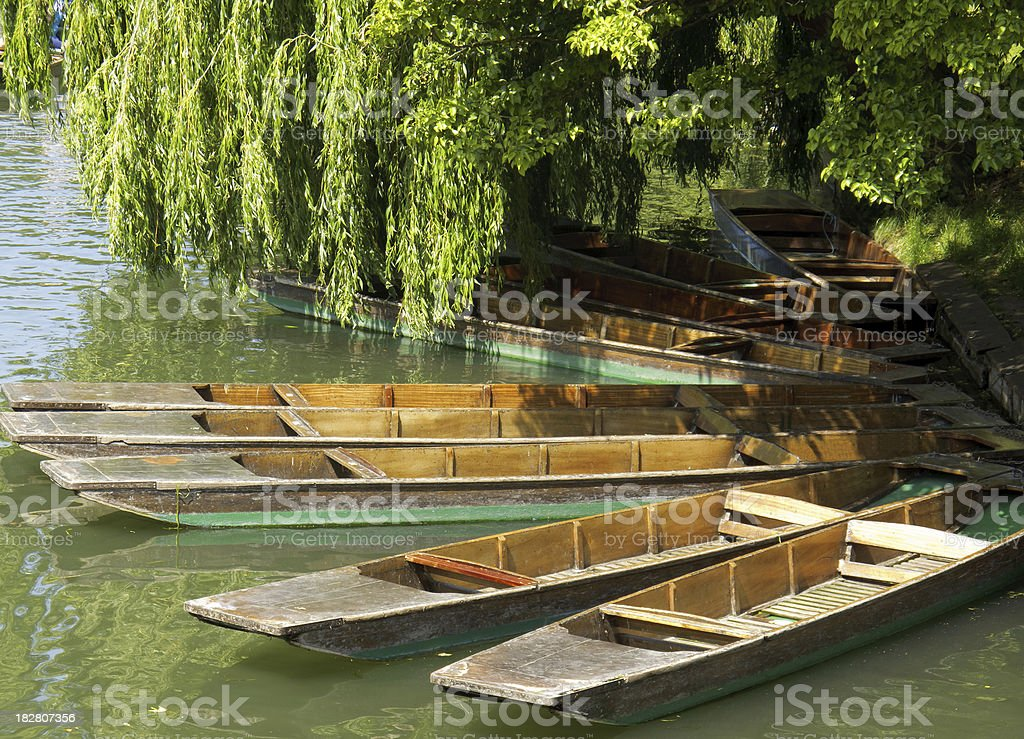 Punts moored on the River Cam  in Cambridge stock photo