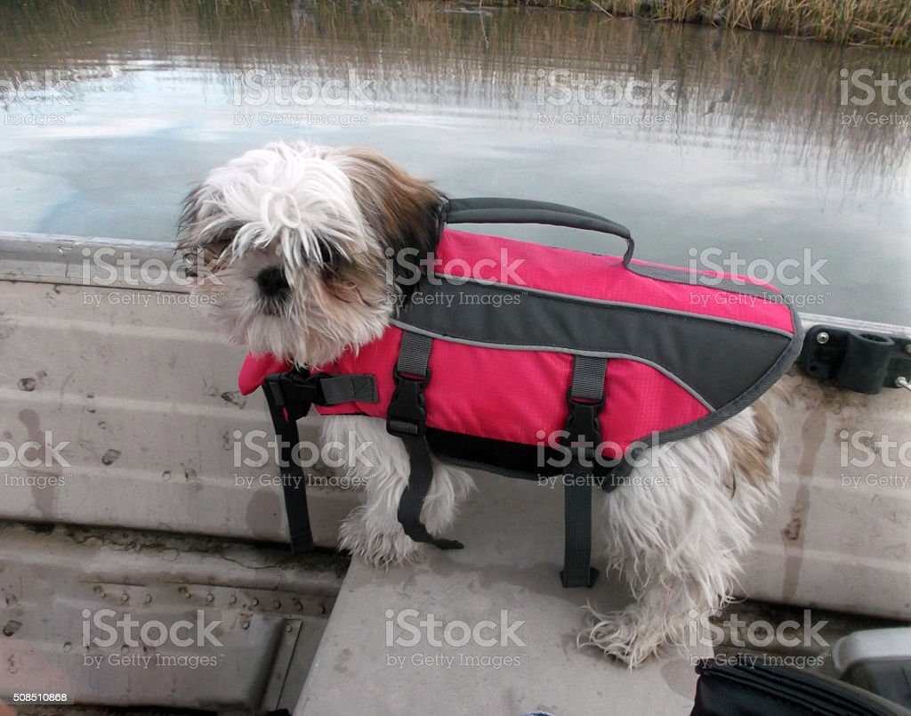 Pup in life jacket stock photo