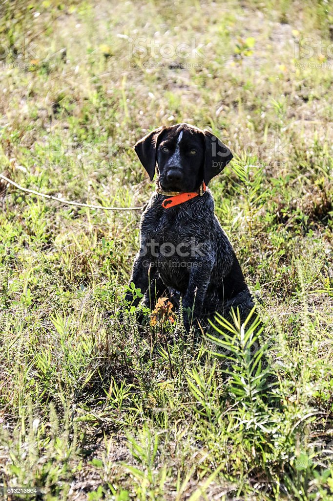pup stock photo