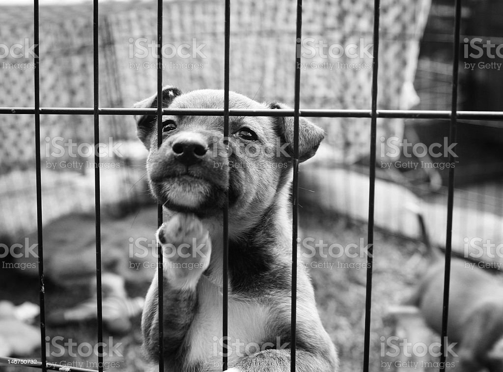 Pup trying to get out of pen stock photo