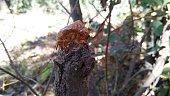 Pupa a cicada on wood