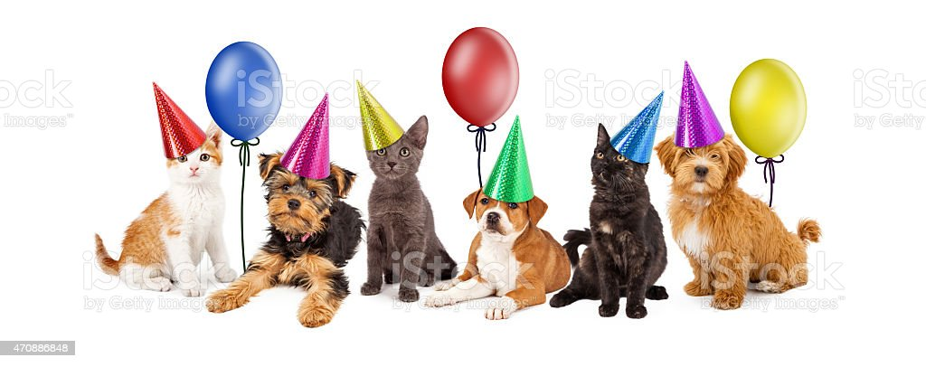 Puppies and Kittens in Party Hats With Balloons stock photo