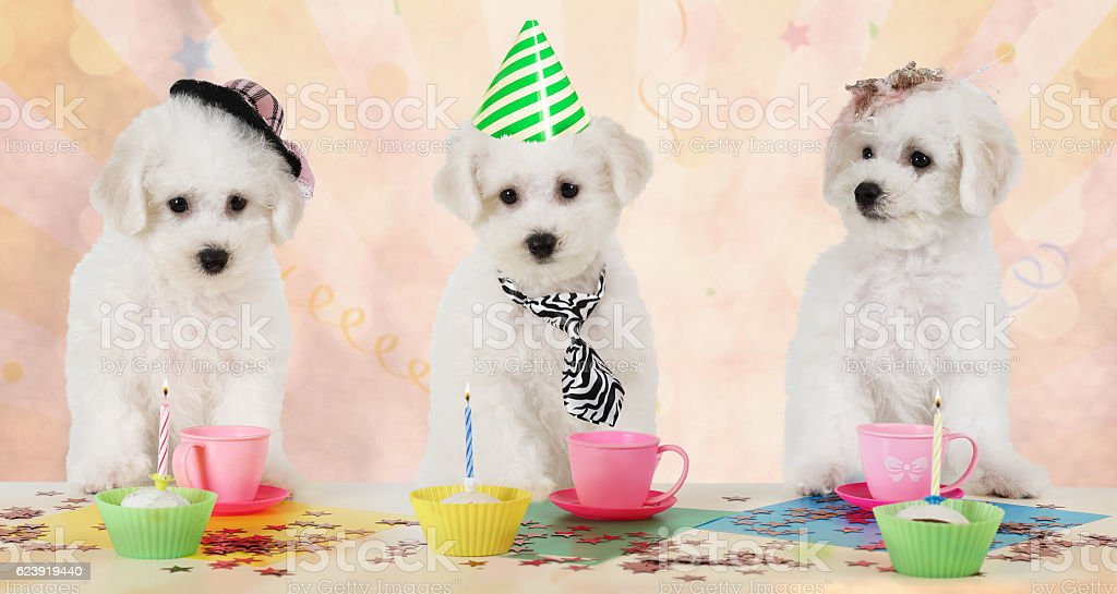 Puppies at the party stock photo