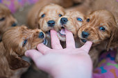 POV of puppies chewing on a hand