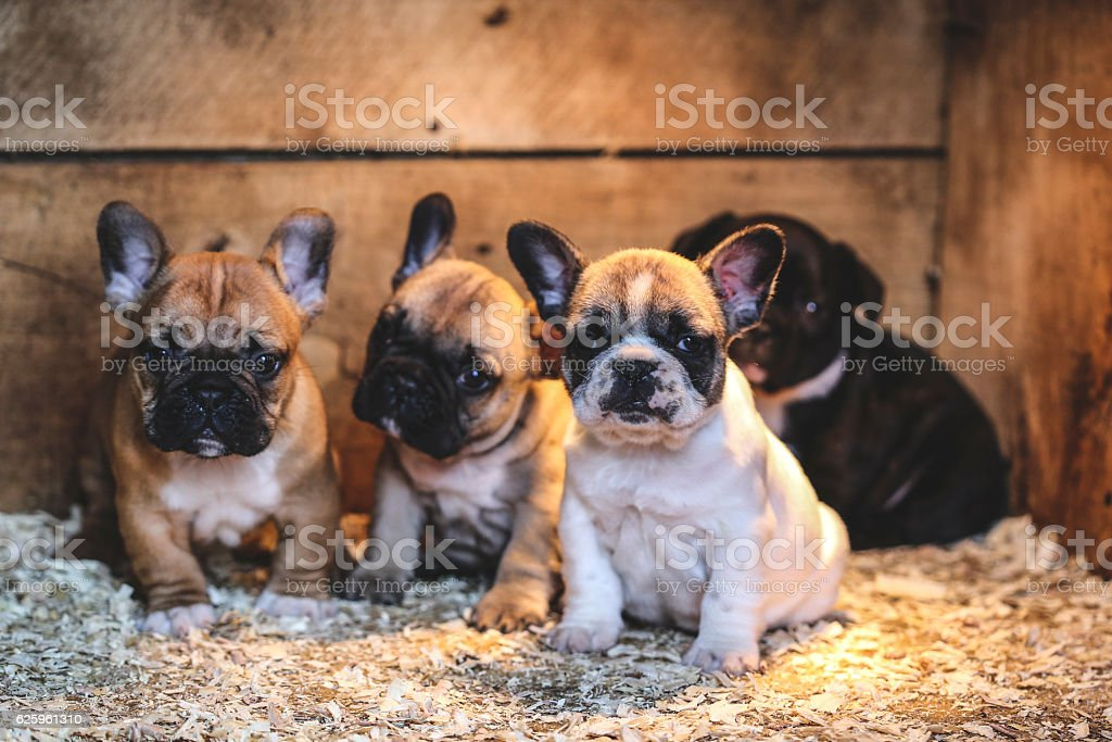 Puppies in dog house stock photo