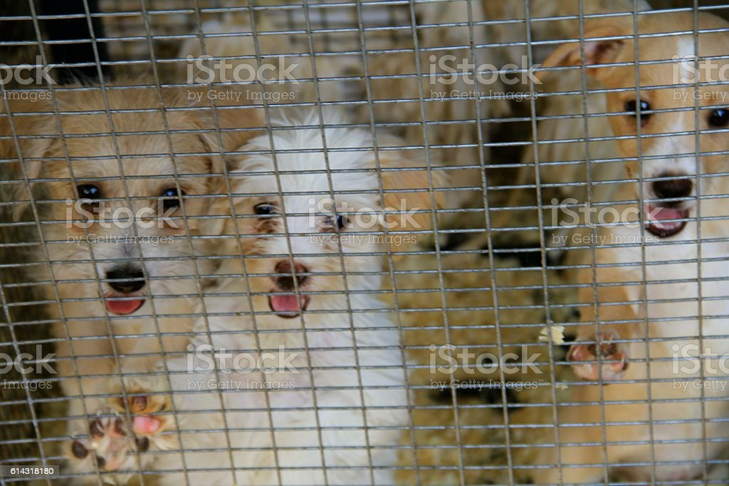 Puppies Just Want a Home stock photo