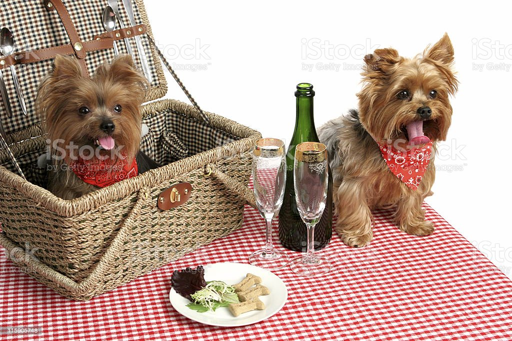 Puppies on Picnic stock photo