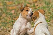 Puppies playing together at Kolkata