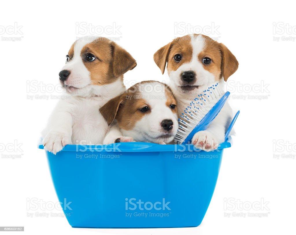 puppies wash stock photo