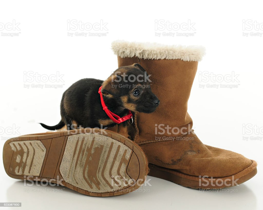 Puppy Among Old Boots stock photo