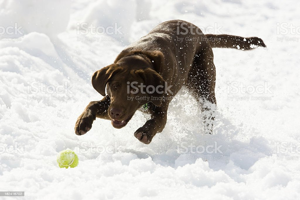 Puppy and Ball royalty-free stock photo