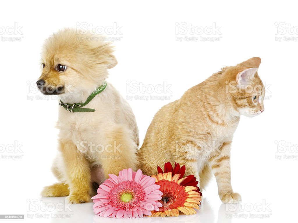 puppy and cat sit near flowers royalty-free stock photo