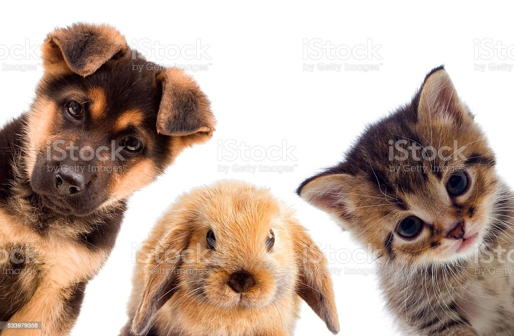 Puppy and kitten and rabbit stock photo