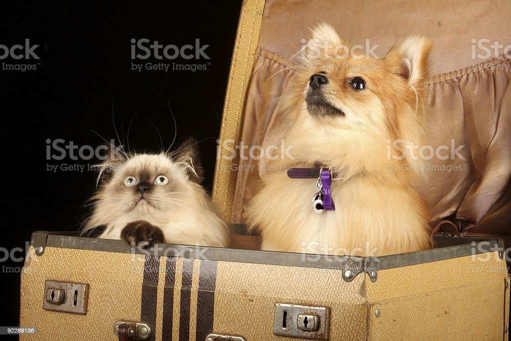 Puppy And Kitten In Suitcase royalty-free stock photo