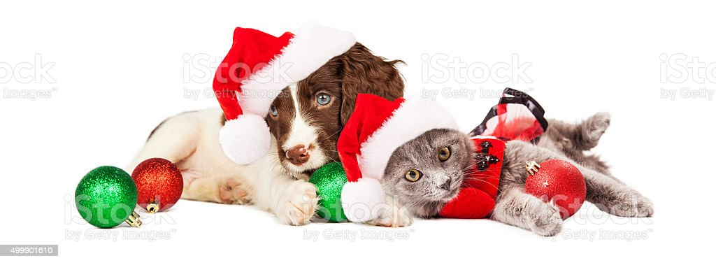 Puppy and Kitten Laying With Christmas Ornaments stock photo