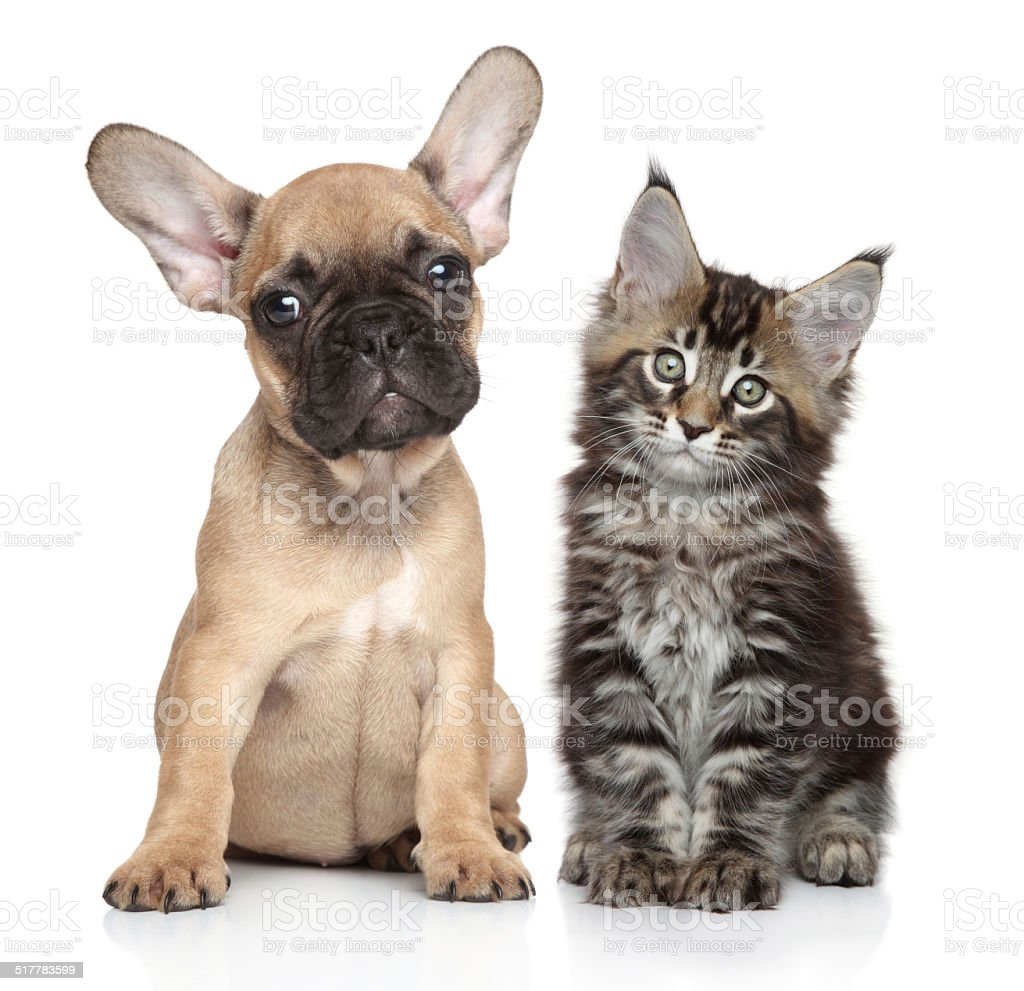 Puppy and kitten on white background stock photo