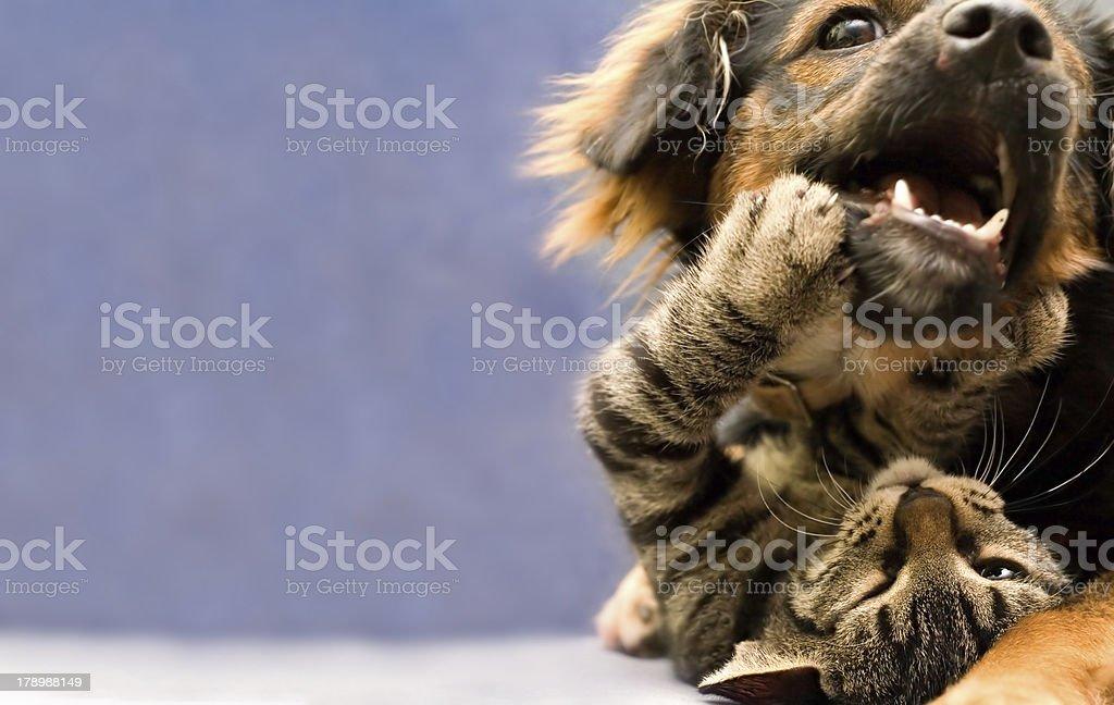 puppy and kitten stock photo