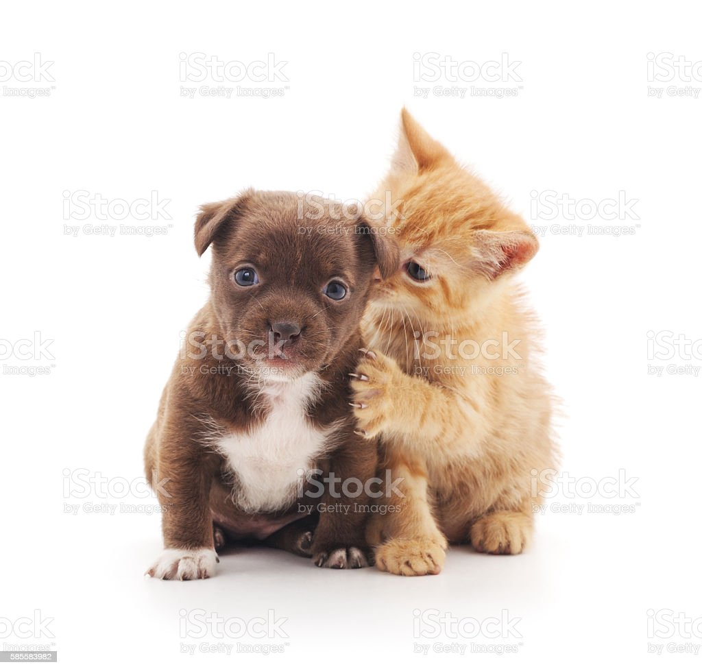 Puppy and kitten. stock photo
