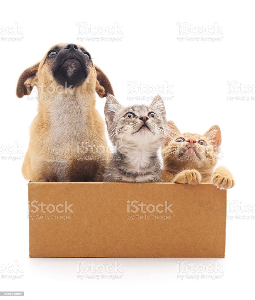 Puppy and two kittens in a box. stock photo