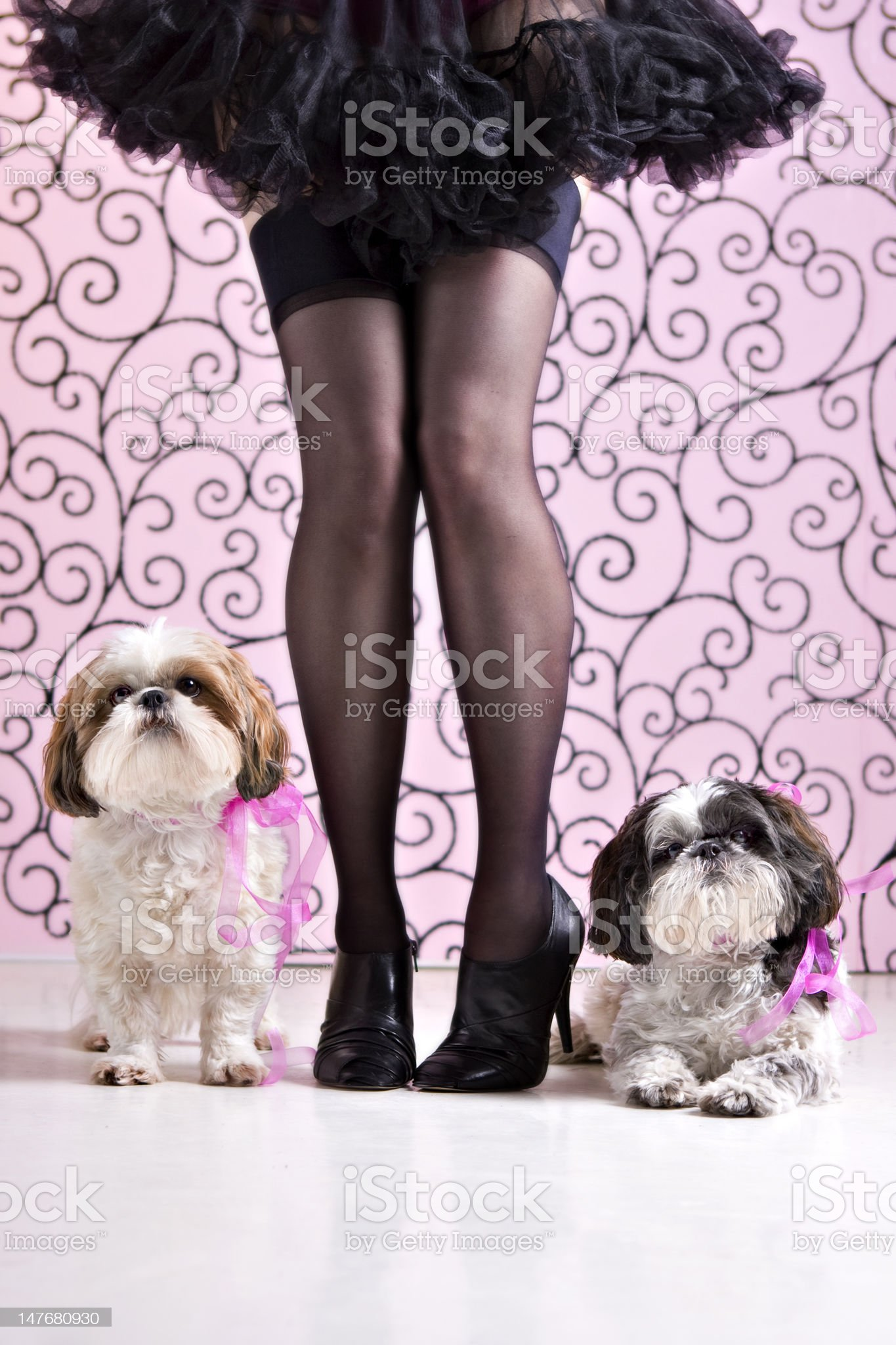 Puppy Boudoir royalty-free stock photo