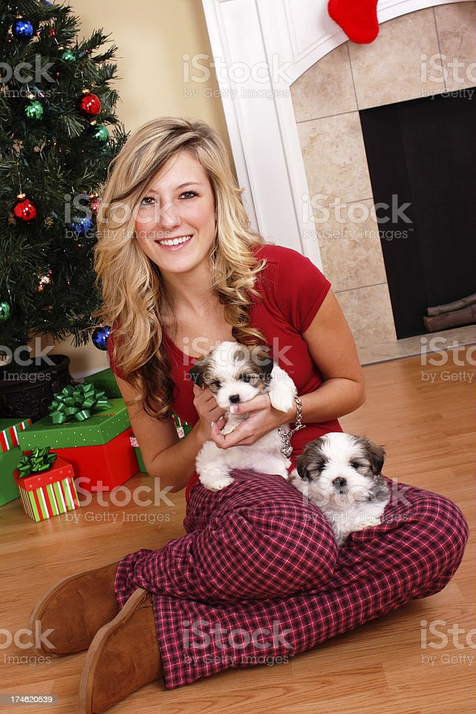 Puppy Christmas Present royalty-free stock photo