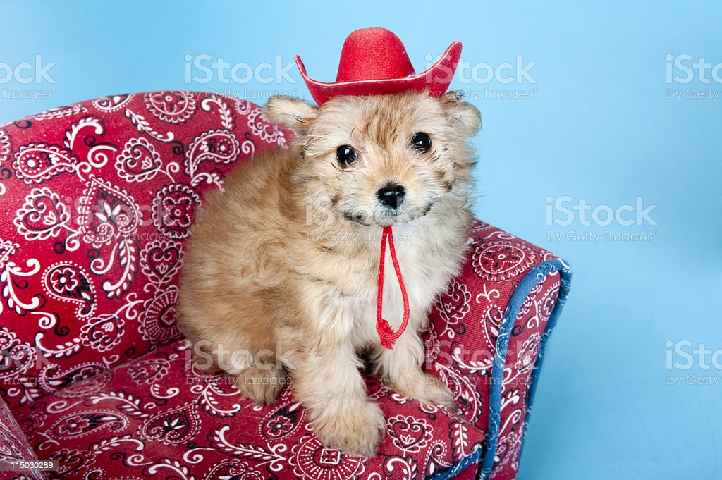 puppy cowboy stock photo