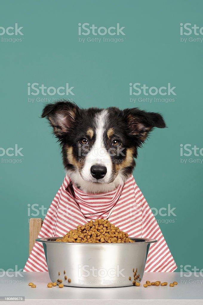 Puppy dinner stock photo