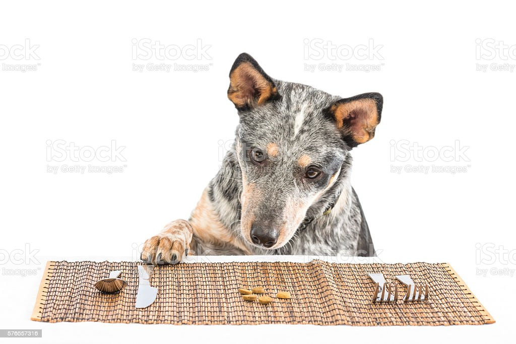 Puppy Dinner stock photo
