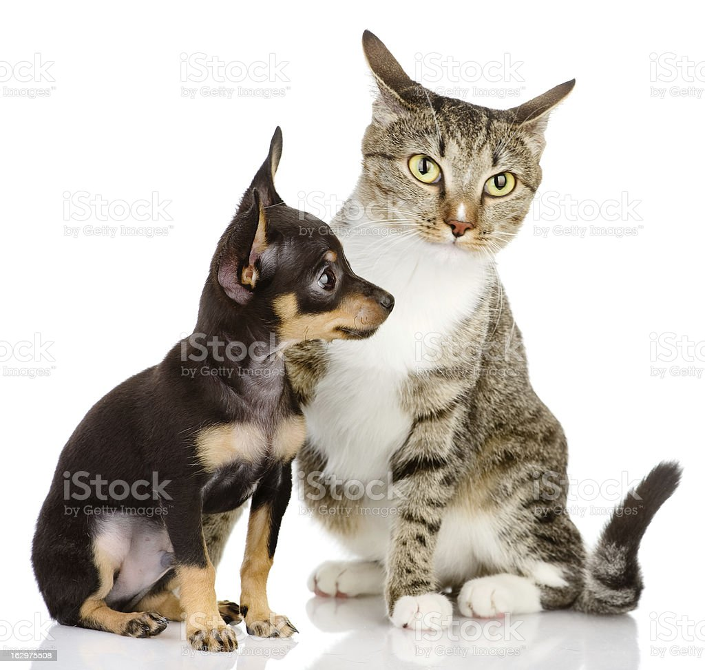 puppy dog and cat royalty-free stock photo